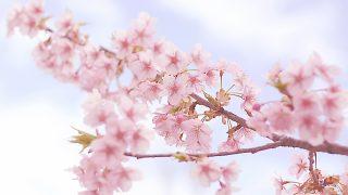 春のおすすめドレス|桜柄ワンピース10選